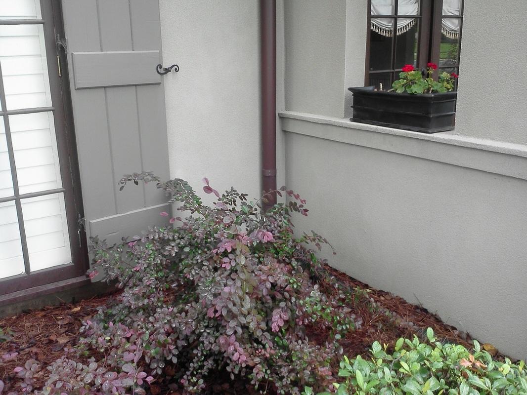 Cajun Soft Wash house Washing exterior plants